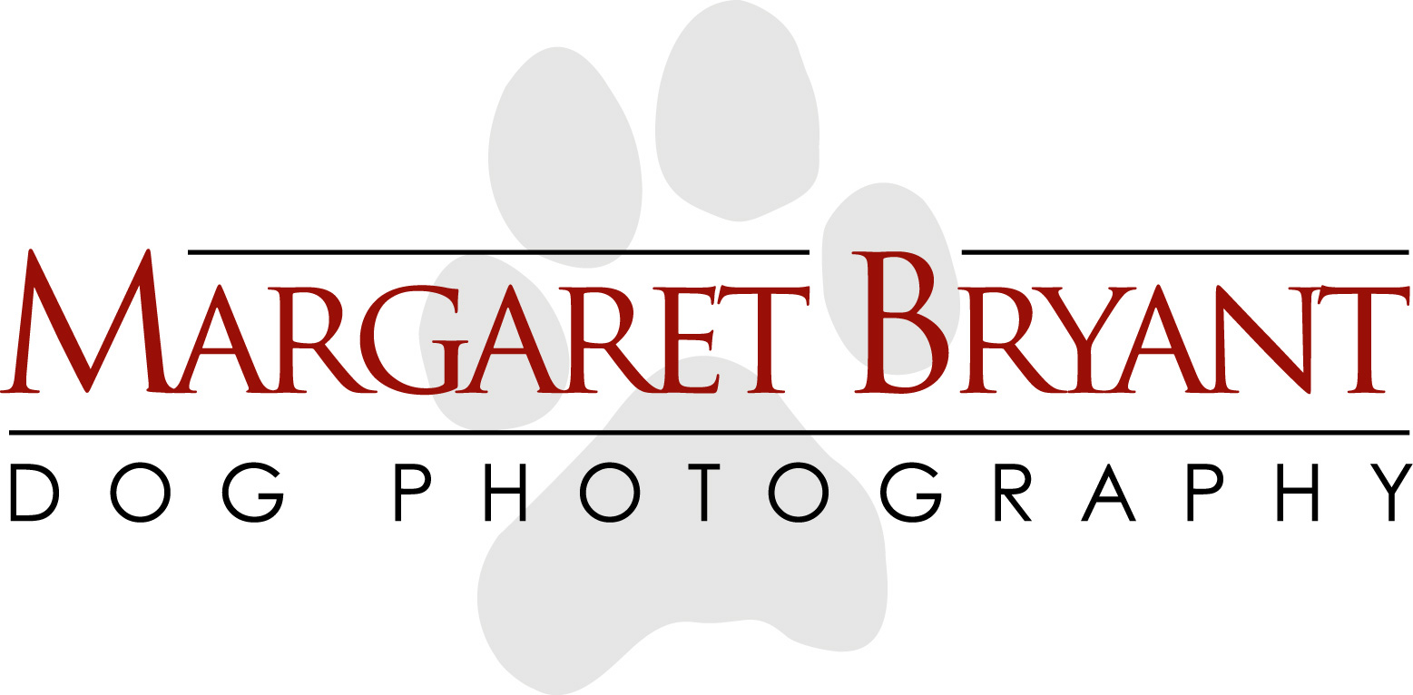 Margaret Bryant Dog Photography